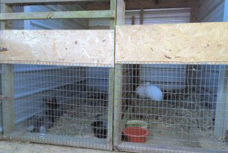 cage flemish giant