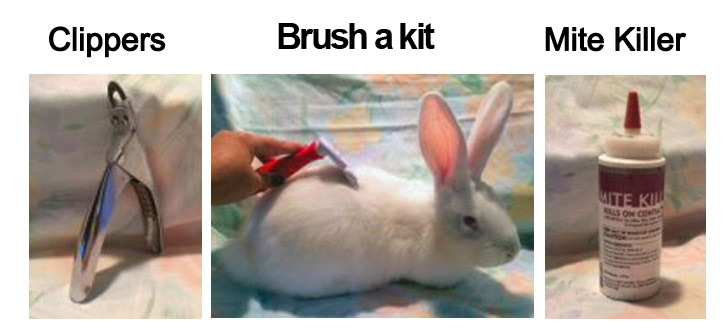 items for grooming a flemish giant